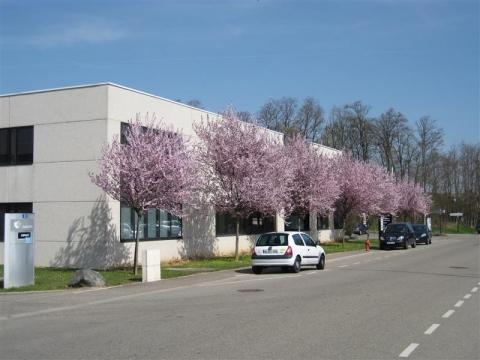 Location Activités Entrepôts ECKBOLSHEIM - Photo 1